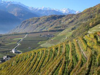 Locanda Altavilla in Bianzone - Valtellina