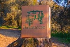 Olivenöl Extra Vergine Balduccio Ernte 2020 (2,5 Liter) - Toskana